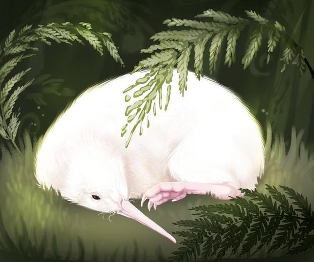 Con chim trắng chết trên bàn mổ khiến cả New Zealand tiếc thương ảnh 3