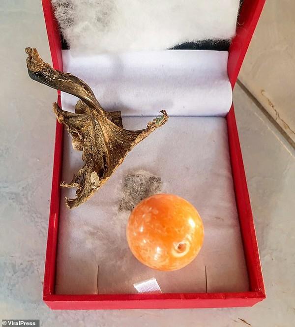Cắn trúng viên ngọc trai màu cam tiền tỉ khi đang ăn ốc luộc ảnh 7