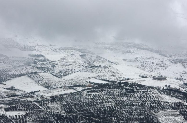 Hài hước cảnh lạc đà ngơ ngác khi thấy tuyết rơi ở Ả Rập Saudi ảnh 4