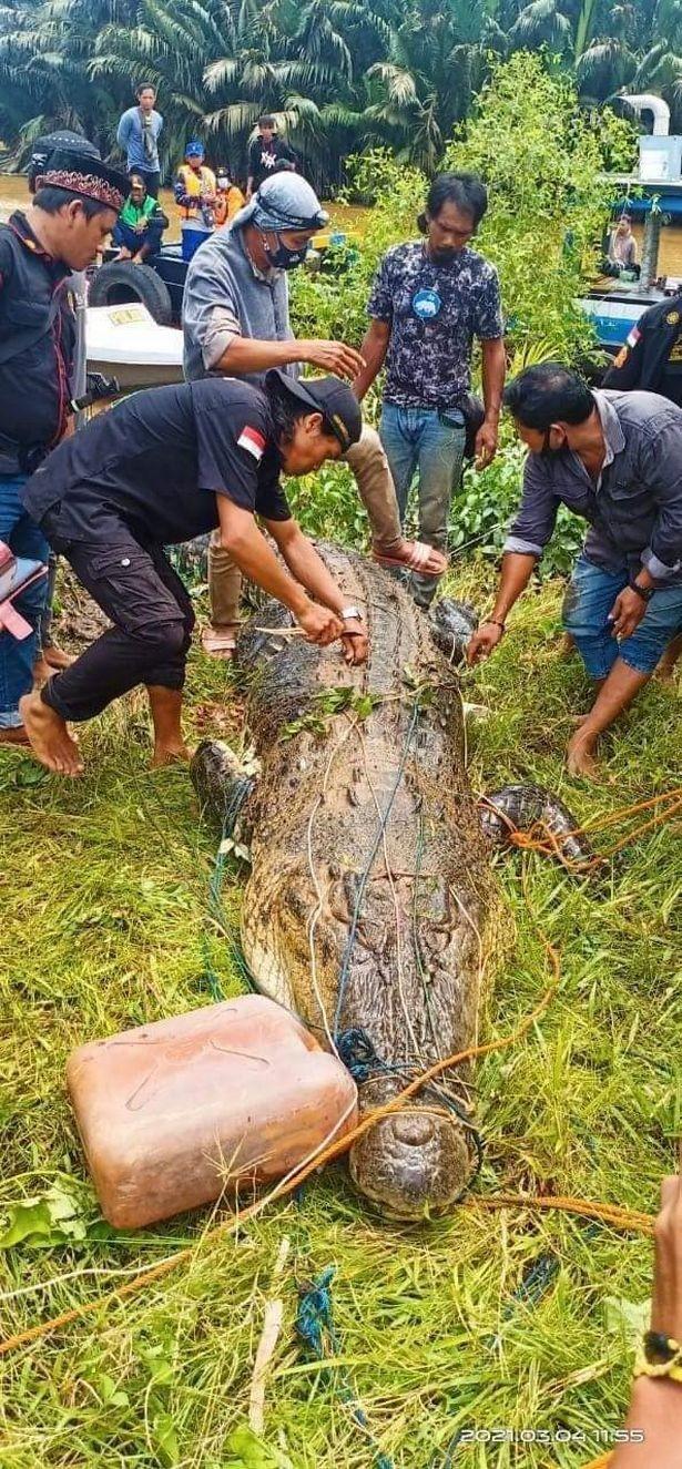 Mổ bụng cá sấu khổng lồ, tìm thấy thi thế bé trai còn nguyên vẹn ảnh 1