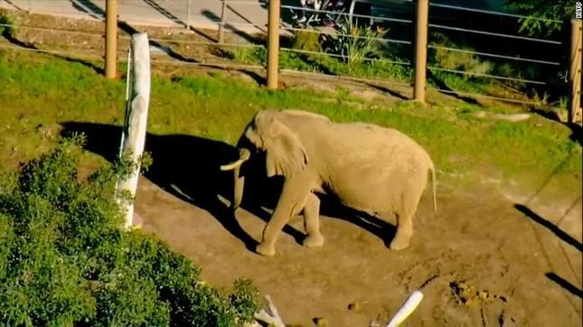 Mỹ: Bố bế con hai tuổi trèo hàng rào điện vào chuồng voi ảnh 1
