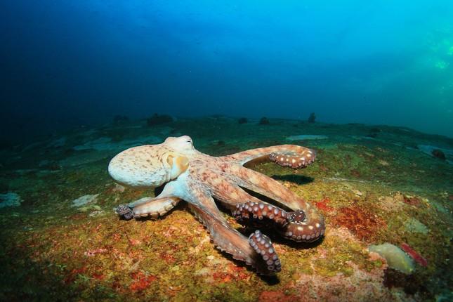 Kỳ lạ: Châu chấu có tai ở bụng, bạch tuộc có 3 tim ảnh 2