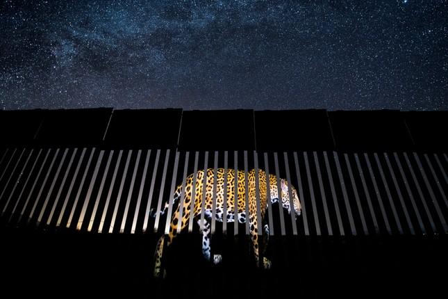 15 bức ảnh động vật hoang dã đẹp nhất năm 2019 ảnh 9
