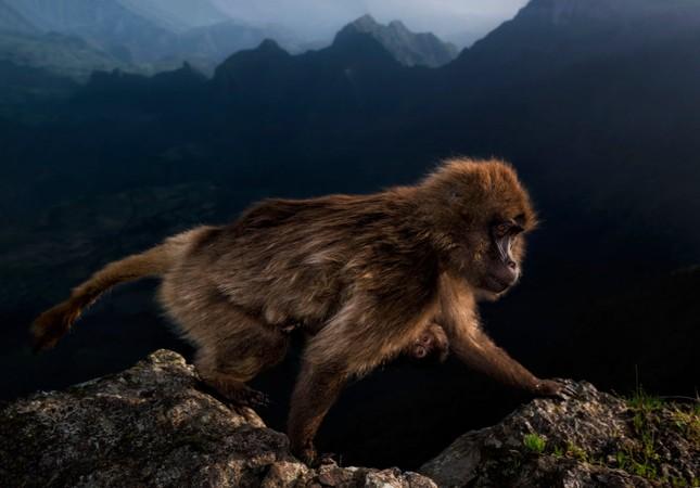 15 bức ảnh động vật hoang dã đẹp nhất năm 2019 ảnh 14