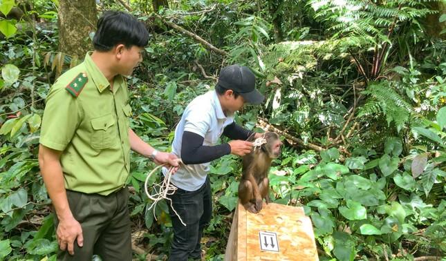 Bình Định: Bàn giao cá thể tê tê vàng cho Vườn quốc gia Cúc Phương ảnh 3