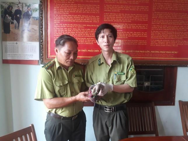 Bình Định: Bàn giao cá thể tê tê vàng cho Vườn quốc gia Cúc Phương ảnh 1