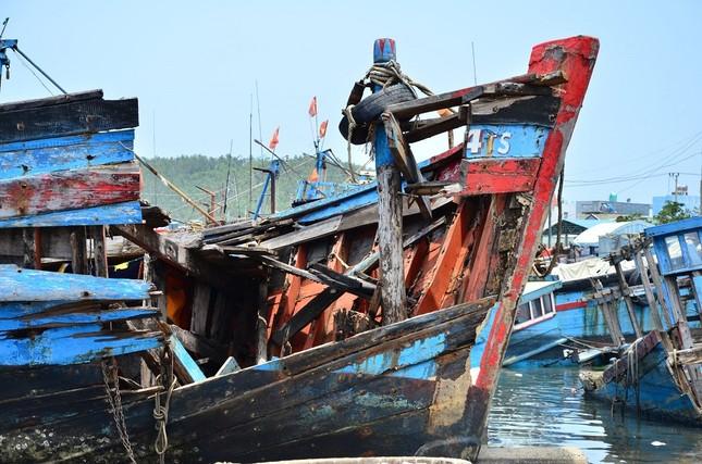 Nhếch nhác 'nghĩa địa' tàu cá tiền tỉ ở cảng Sa Huỳnh ảnh 2