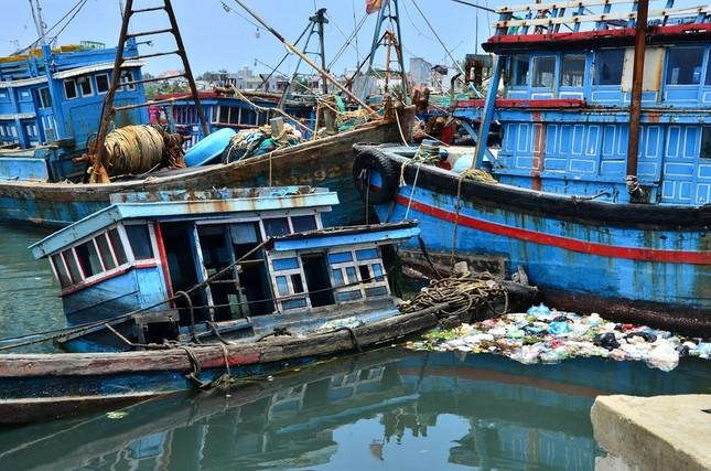 Nhếch nhác 'nghĩa địa' tàu cá tiền tỉ ở cảng Sa Huỳnh ảnh 7