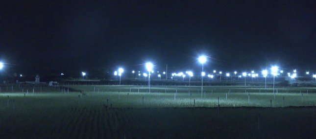 Đèn bẫy bướm trên 'thủ phủ' hành tím ở Lý Sơn sáng rực như sao trời về đêm ảnh 3