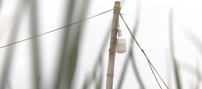 Đèn bẫy bướm trên 'thủ phủ' hành tím ở Lý Sơn sáng rực như sao trời về đêm ảnh 6