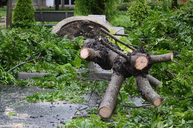 Ảnh hưởng bão số 6: Sạt lở núi chia cắt nhiều tuyến đường, Quảng Ngãi thiệt hại nặng ảnh 5