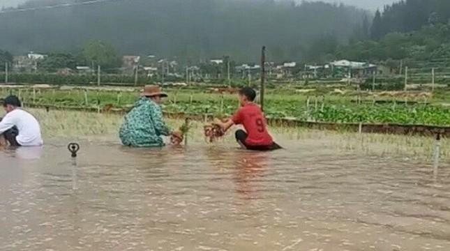 Ảnh hưởng bão số 6: Sạt lở núi chia cắt nhiều tuyến đường, Quảng Ngãi thiệt hại nặng ảnh 6