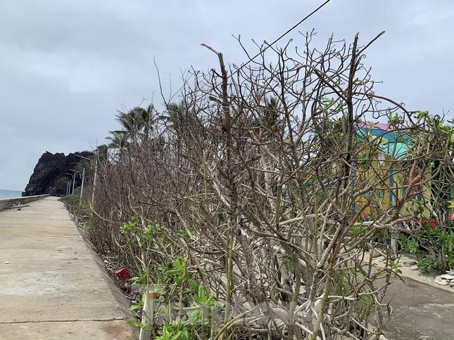 Cây xanh không lá trên đảo tiền tiêu ảnh 15