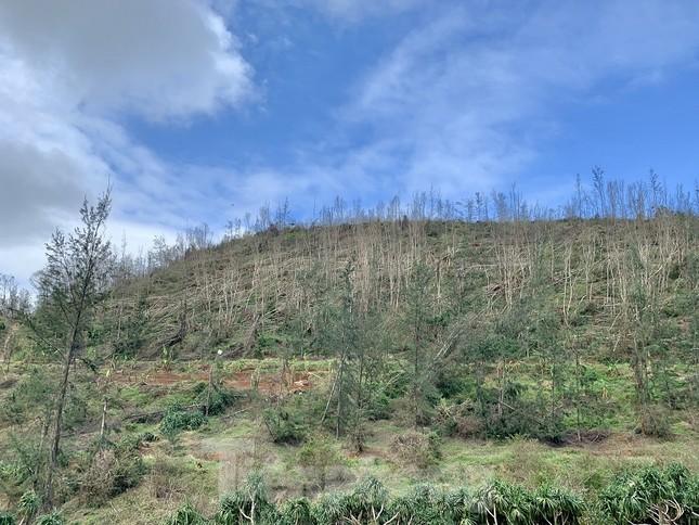 Cây xanh không lá trên đảo tiền tiêu ảnh 12