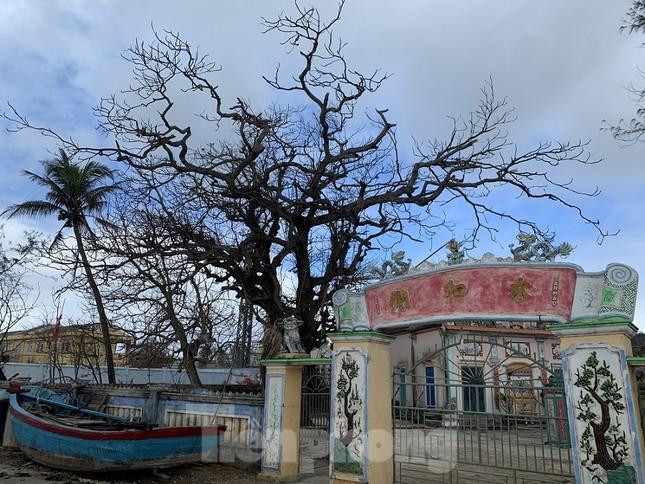 Cây xanh không lá trên đảo tiền tiêu ảnh 2