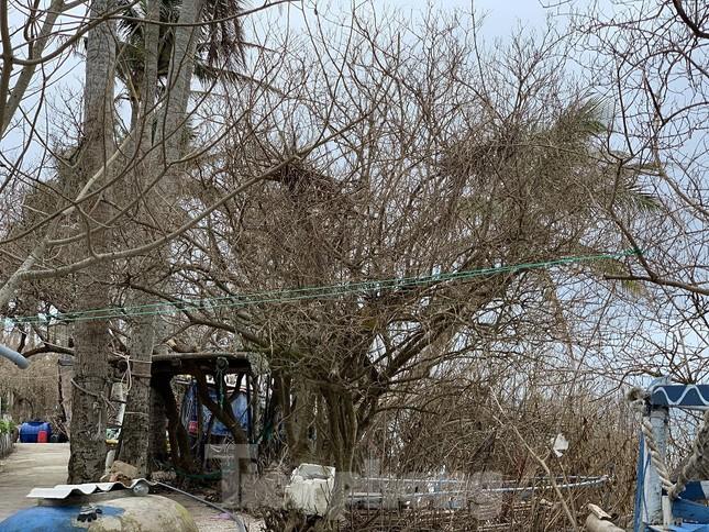 Cây xanh không lá trên đảo tiền tiêu ảnh 14