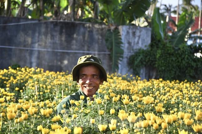 Sau bão chồng bão đi qua, sắc vàng ngập tràn 'thủ phủ' hoa cúc ở Quảng Ngãi ảnh 4