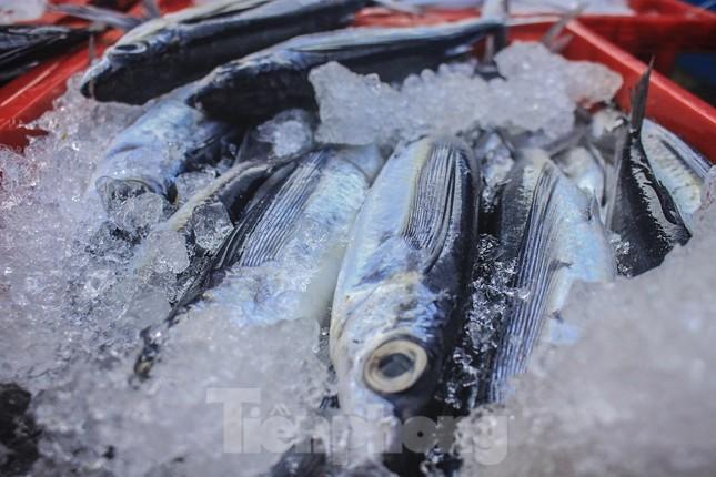 Ngư dân Quảng Ngãi trúng đậm sau chuyến biển xuyên Tết ảnh 11