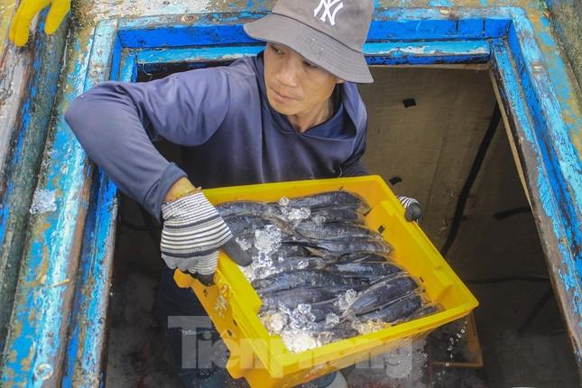 Ngư dân Quảng Ngãi trúng đậm sau chuyến biển xuyên Tết ảnh 7