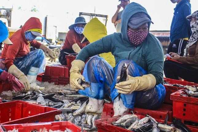 Ngư dân Quảng Ngãi trúng đậm sau chuyến biển xuyên Tết ảnh 12