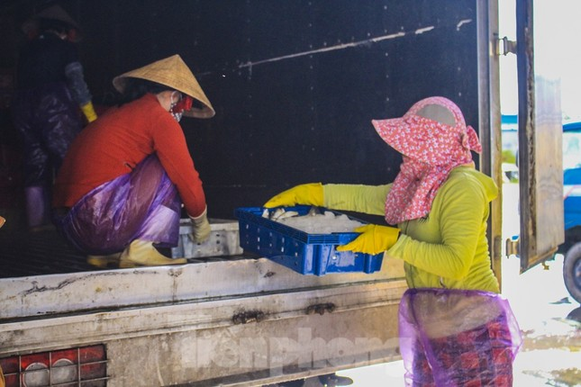 Ngư dân Quảng Ngãi trúng đậm sau chuyến biển xuyên Tết ảnh 14