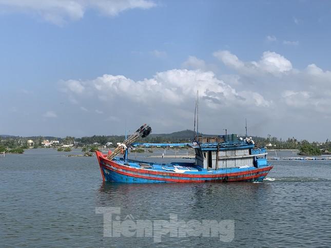 Ngư dân Quảng Ngãi trúng đậm sau chuyến biển xuyên Tết ảnh 1
