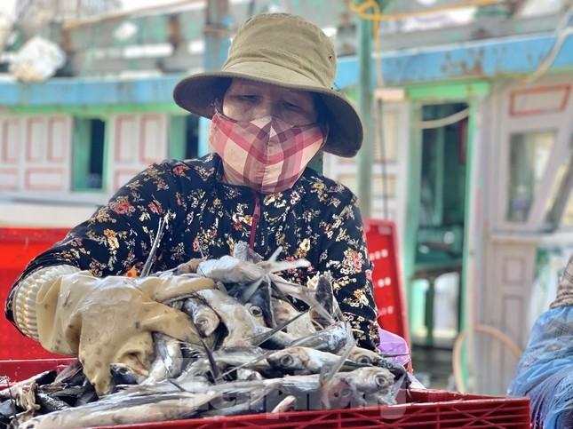 Ngư dân Quảng Ngãi trúng đậm sau chuyến biển xuyên Tết ảnh 2