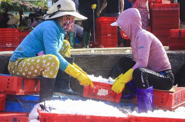 Ngư dân Quảng Ngãi trúng đậm sau chuyến biển xuyên Tết ảnh 9