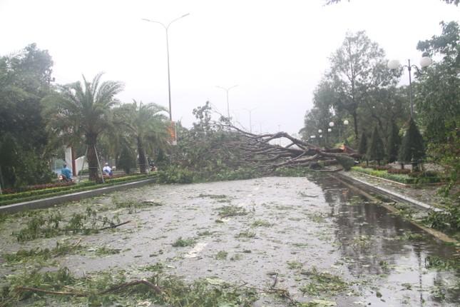 Sau bão số 5, cây cối đổ ngổn ngang, bãi biển Quy Nhơn ngập ngụa rác ảnh 3