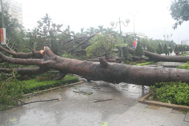 Sau bão số 5, cây cối đổ ngổn ngang, bãi biển Quy Nhơn ngập ngụa rác ảnh 4