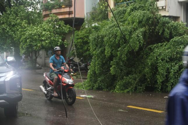 Sau bão số 5, cây cối đổ ngổn ngang, bãi biển Quy Nhơn ngập ngụa rác ảnh 5