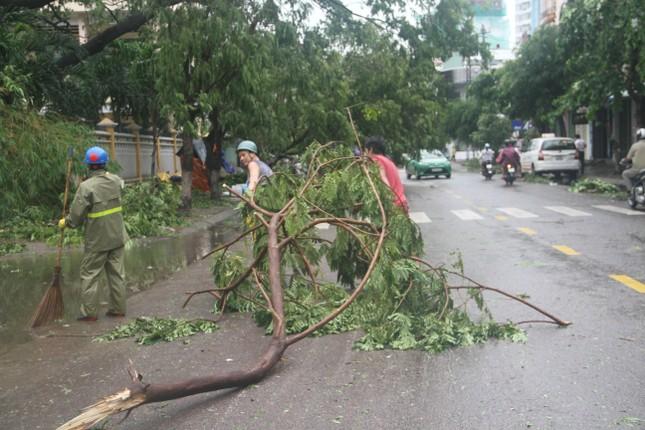 Sau bão số 5, cây cối đổ ngổn ngang, bãi biển Quy Nhơn ngập ngụa rác ảnh 9