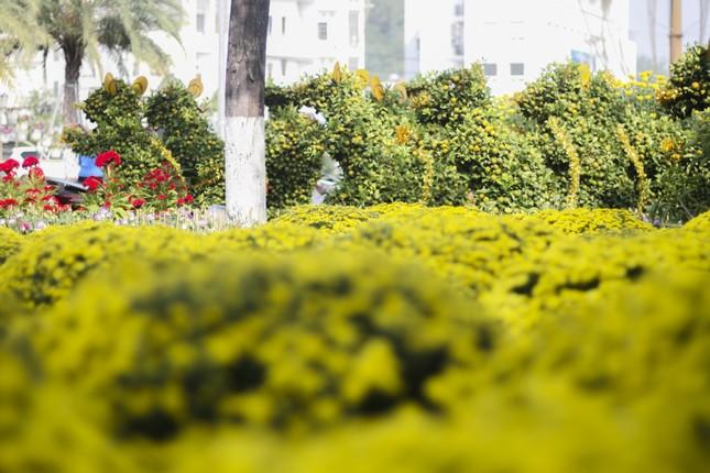 Quất bonsai tạo hình chuột khuấy động chợ hoa Tết ảnh 3