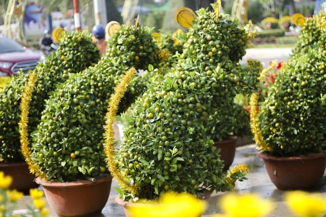 Quất bonsai tạo hình chuột khuấy động chợ hoa Tết ảnh 2