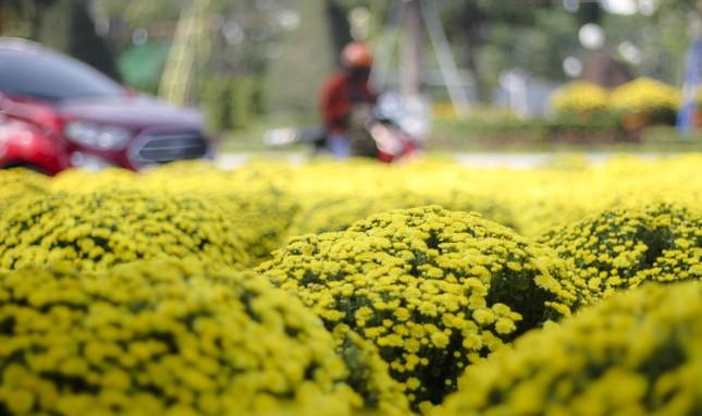 Quất bonsai tạo hình chuột khuấy động chợ hoa Tết ảnh 6