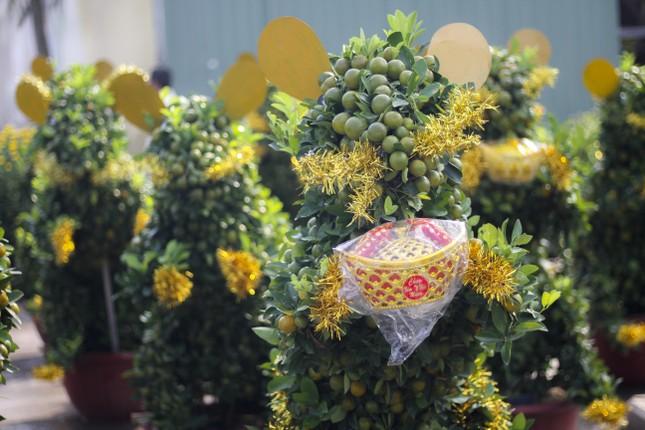 Quất bonsai tạo hình chuột khuấy động chợ hoa Tết ảnh 1
