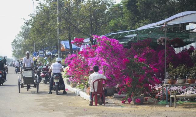 Quất bonsai tạo hình chuột khuấy động chợ hoa Tết ảnh 8