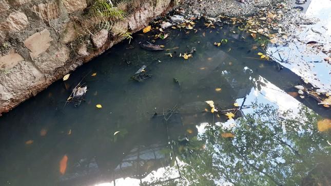 Khu dân cư ở Bình Định khốn đốn vì nước thải ô nhiễm ảnh 3