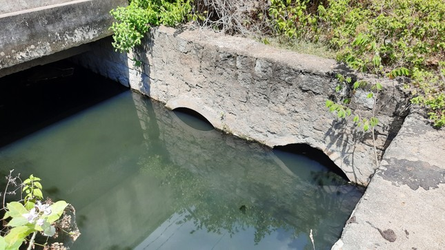 Khu dân cư ở Bình Định khốn đốn vì nước thải ô nhiễm ảnh 4