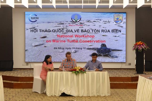 Số lượng rùa lên bãi biển đẻ trứng tại Việt Nam giảm hơn 22 lần ảnh 1