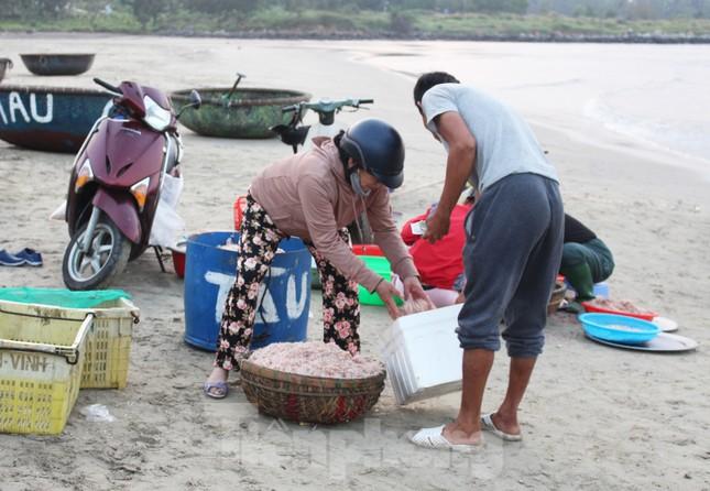 Ngư dân Đà Nẵng nhộn nhịp vào mùa 'xúc' lộc biển ảnh 7