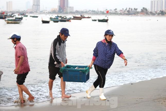 Ngư dân Đà Nẵng nhộn nhịp vào mùa 'xúc' lộc biển ảnh 1