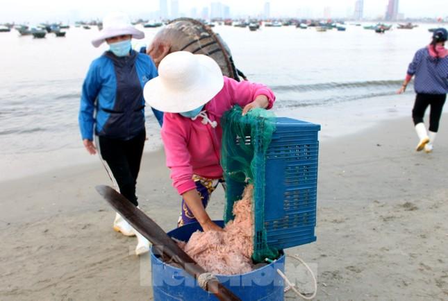 Ngư dân Đà Nẵng nhộn nhịp vào mùa 'xúc' lộc biển ảnh 8