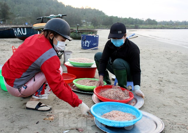 Ngư dân Đà Nẵng nhộn nhịp vào mùa 'xúc' lộc biển ảnh 2