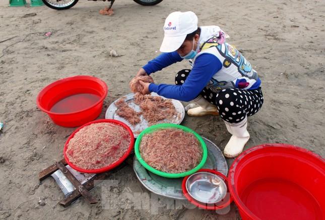 Ngư dân Đà Nẵng nhộn nhịp vào mùa 'xúc' lộc biển ảnh 5
