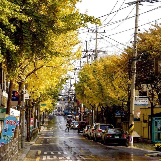 Bạn đọc sáng tác: Hẹn gặp ở Seoul, nơi những ánh đèn không lấp lánh bằng mắt cậu ảnh 3