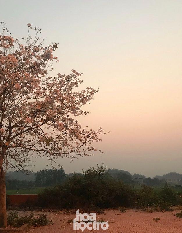 """Xuân này ghé Điện Biên: Sắc ban trắng vẽ nên một """"nàng thơ"""" Tây Bắc mộng mơ ảnh 5"""