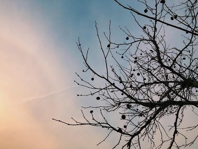 Cuộc thi viết Trà sữa cho tâm hồn: Cái cây cái sân trước nhà ảnh 1