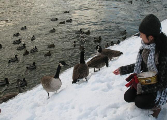 """Giải mã """"hội chứng Stockholm"""": Tại sao tôi lại yêu và mê Stockholm đến vậy? ảnh 7"""