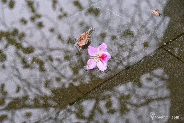 Hà Nội: Rủ bạn thân, gà bông chụp ngay bộ ảnh trên con đường hoa ban tím đẹp mơ màng ảnh 2